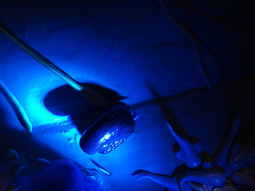 鉄のカラを持つ貝、スケーリーフット。…おや?画面の左端、イカの触手のようなものが、通っていきました。