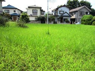 東京だけど自然が多いなあ。雑草生えてるとなんか安心するなあ。