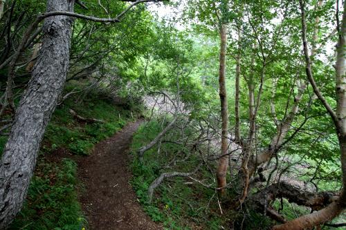 森林限界付近、木々が茂る中をてくてく歩く