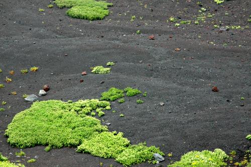 第二火口の底は凹凸のある砂地。ちょっとした草も生えている