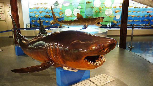 サメ(方言ではワニ)