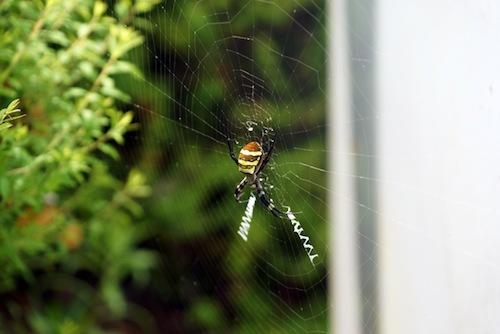 佐渡で撮影。幾何学的な網がかっこいい。トロンだ。トロングモだ。