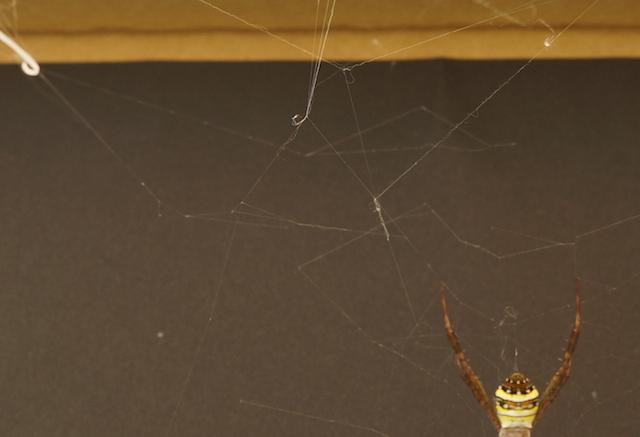 一部拡大。パンキッシュな網に仕上がりました。