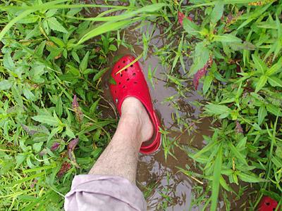 泥の中に足を突っ込むことに一瞬躊躇したが、すぐにどうでもよくなった。こういう感覚、懐かしい。