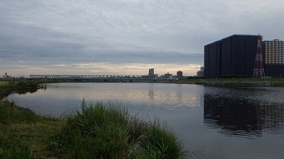 実は大魚がひしめく河川、江戸川。岸辺には立派な建物が見える。