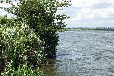 なるべく岸ギリギリまで土と緑がある場所を探す。