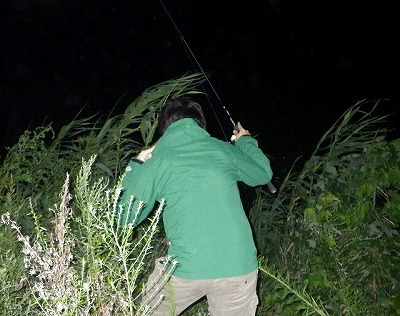 ソウギョは人影や足音に対してとても敏感。川を覗きこむのも歩き回るのも御法度。岸際からできるだけ後退して待ち伏せる。
