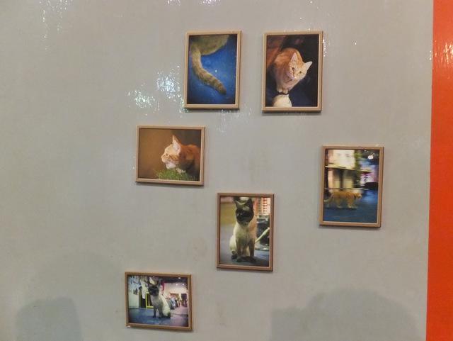 きれいに撮れた猫の写真展示スペース