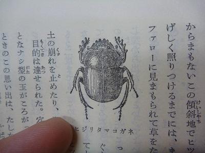 これがファーブル昆虫記のスカラベ。似てるでしょ?