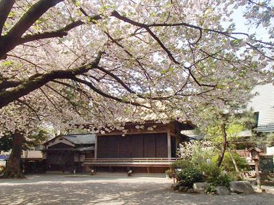 今回の会場は4月中頃にはこんな感じで桜が咲いています。こんな時期にまた出来たらいいね。今はまだ分かりません。