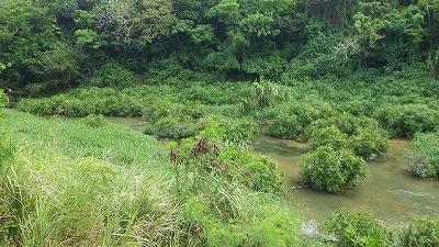 沖縄本島中部の川へ