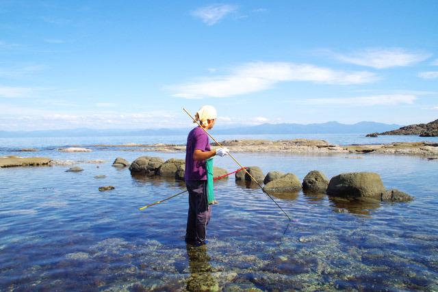 水の透明度が素晴らしい。秋のタコ捕りもいいけど、夏のシュノーケルもいいだろうな。