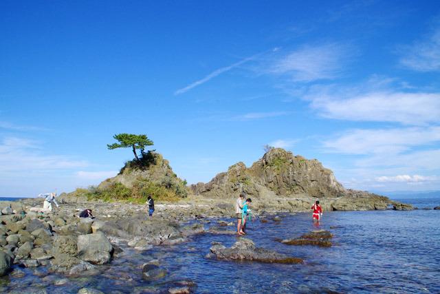 私は2泊して月曜日に自転車で粟島を一周したのだが、島の海岸のほとんどが、こんな感じのタコ捕りに適した場所だった。