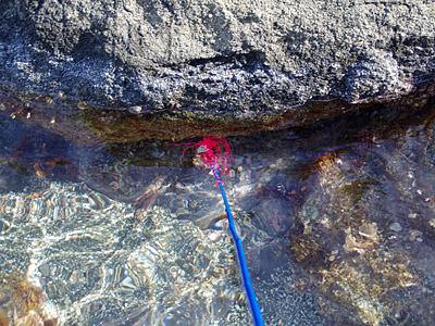 岩から少し離れたところを狙わないといけないのだが、ついついガシガシと突っ込んでしまう。