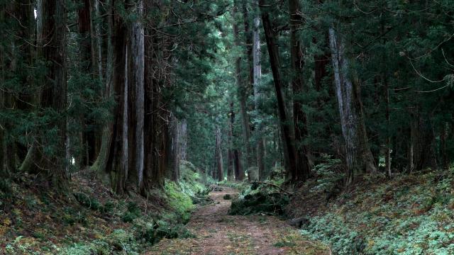 世界最長の杉並木と聞けば、歩き通してみたいと思うのです