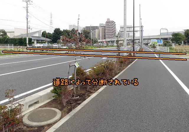 この道路(比較的新しい)ができる前はきっと線のように水道道がつながっていたはず。もったいない。