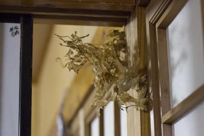 昨年の年ぬ夜に飾り、1年間家を守ったカズラ