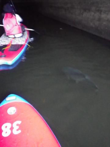 入り口にものすごく大きな魚が泳いでいる。いまにも吹き出しがついてなんか喋りそう。