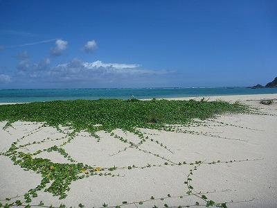 いまさらだが石垣島は海が綺麗。だがもはやその中にいる珍名魚にしか興味はない。