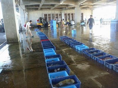 早朝の漁港。セリの準備中でたくさんの魚がトロ箱に詰められて並んでいく。