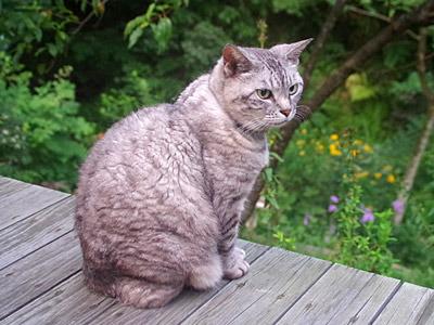 凛々しい猫。