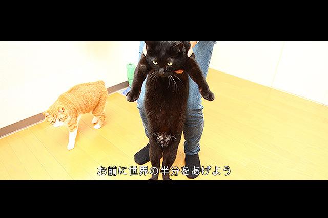 ドラクエ映画化である。そして竜王。猫だけど。左にいるのはローラ姫。