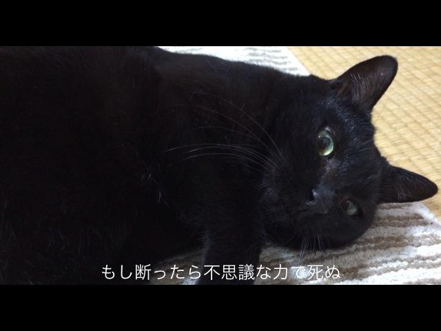 黒猫が恐い。
