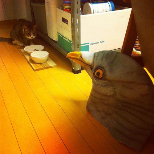 ネコの警戒した表情!(サワモトさんの写真)
