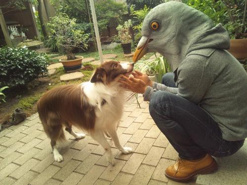 別の写真でも犬がいい表情をしていた
