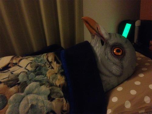 こういう目で寝るのか、寝付けずに考えごとをしているようにも見える(モリブデンさんの写真)
