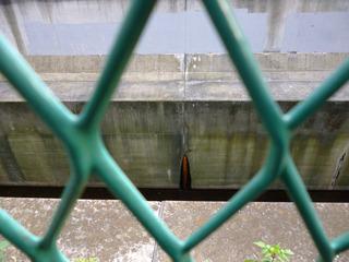 柵の向こうは渋谷川が流れている