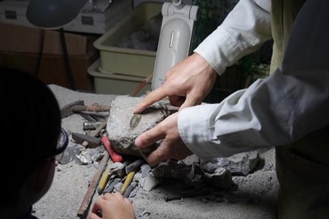化石から石をとりのぞくクリーニング体験が人気。「毎年夏休みになるといらっしゃるとか、意外とここはリピーターが多い施設なんです」そうなのか!