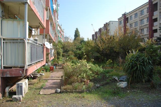 都営団地でよく見られる、住民の手入れによるプチ林。