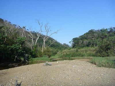 沖縄のありのままの自然を残す清流…に見せかけてティラピアはばっちりいやがる北部の川。