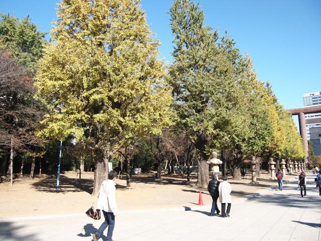ひねった方向にあるのは、木。