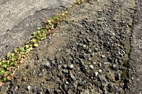 故に、植物や苔が生える。そして根がアスファルトをさらに割り、土へと還す。風化のプロセスがここにある