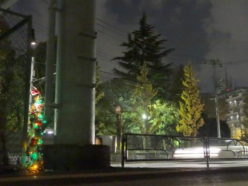 そびえ立つ針葉樹と雑草クリスマスツリー
