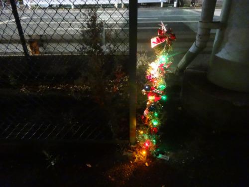 アスファルトに咲くクリスマスツリー