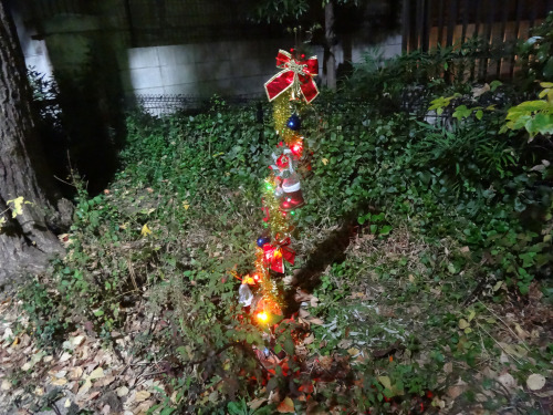 森の中に突然姿を現したクリスマスツリー