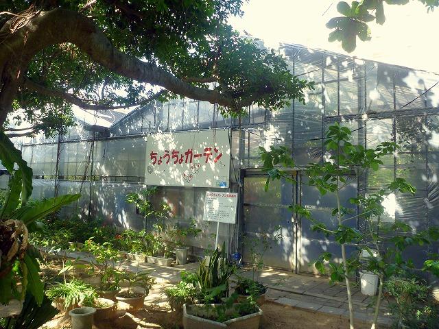 沖縄県那覇市にある漫湖公園内の「ちょうちょガーデン」