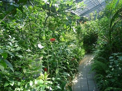 ちょうちょガーデン内部は一見植物園のようだが…