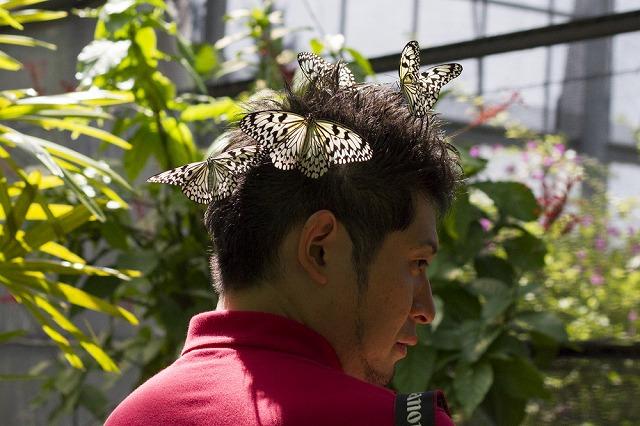蝶といえど4匹も乗っかると若干の重みすら感じる。