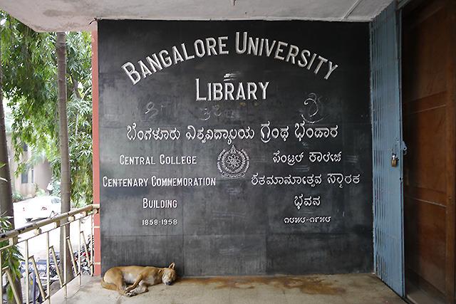 ただ、行ったこともない国で猫が見つかるか、という問題もある。インドには犬だけはたくさんいた。