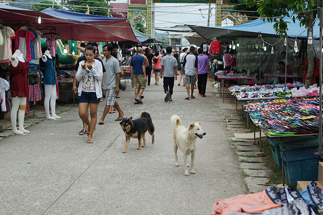 タイにもやはり犬が。