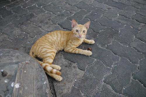 ドバイには猫がいた。顔つきがエジプトの壁画みたいである。