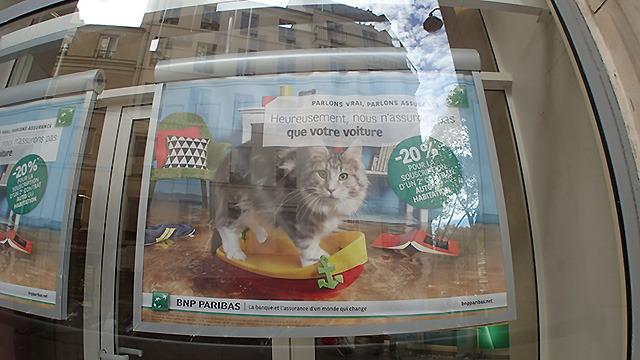 銀行のポスターも猫なのだ。