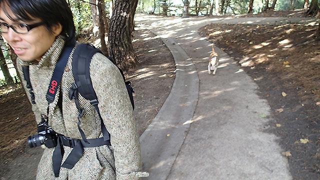 犬が嫌いなライター地主さんが犬に追い掛け回されることも。