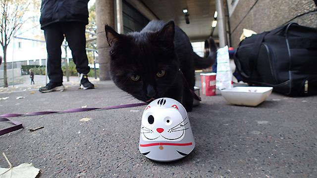 メトロの駅で見つけた飼い猫にも嗅いでもらったが、やはり特に喜ぶでも嫌がるでもなかったです。