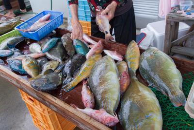 大きな魚がいっぱい