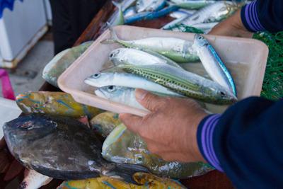 30分前は海の中にいた魚たち